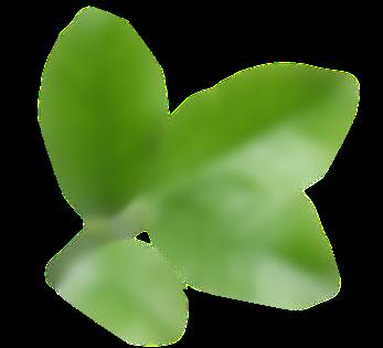 ikona listov